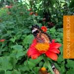 ocean jupiterbutterfly-world-entopia-tours