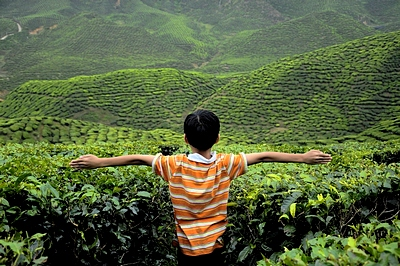 cameron-highland-tea-tours